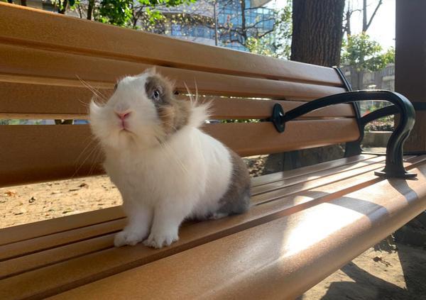 大城市的療癒系小寵物:養兔的三大優/缺點你一直想要養寵物嗎?你可能已經很熟悉貓狗了,但你曾想過有一種