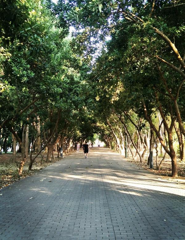 運動了~~~在運動的時候突然覺得這條路像迷你版綠色隧道