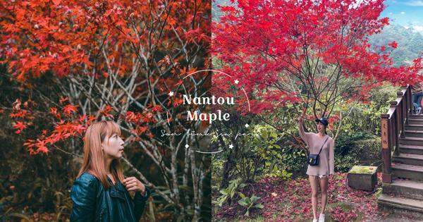 【南投】杉林溪森林一日遊!楓葉水杉漸漸轉紅,來感受滿滿的秋天氣息吧
