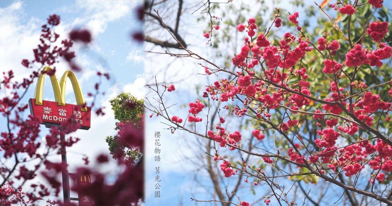櫻之限定 最美麥噹噹櫻花樹下的麥噹噹☞https://reurl.cc/Q748D5&n