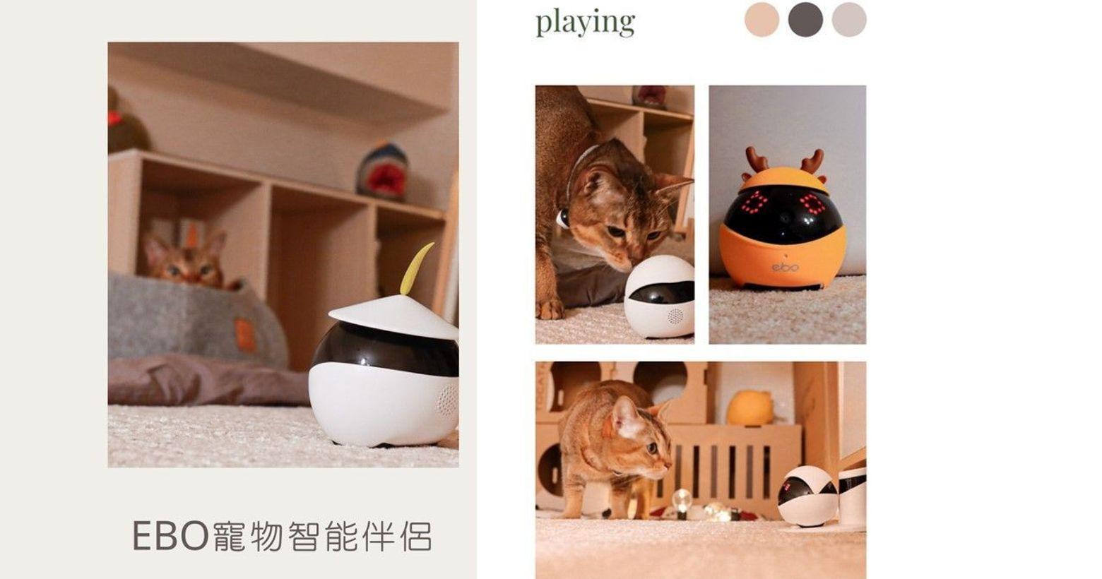 最貼心的陪伴、最真實的互動|EBO 寵物智能機器人陪貓玩只能玩逗貓棒嗎?主人出門只有監視器看著貓咪睡
